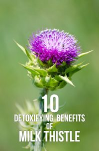10 Detoxifying Benefits of Milk Thistle